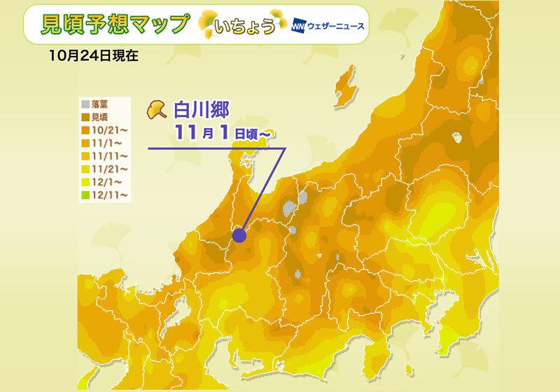 賞銀杏人氣區域:中部・北陸