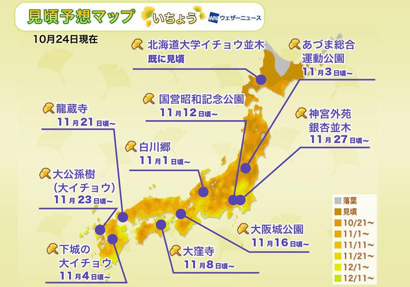 日本全國紅葉:銀杏景點的最佳觀賞時期預測