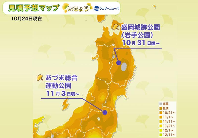 賞銀杏人氣區域:東北