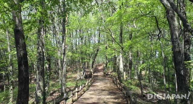 Sayama Hills (Totoro's Forest)