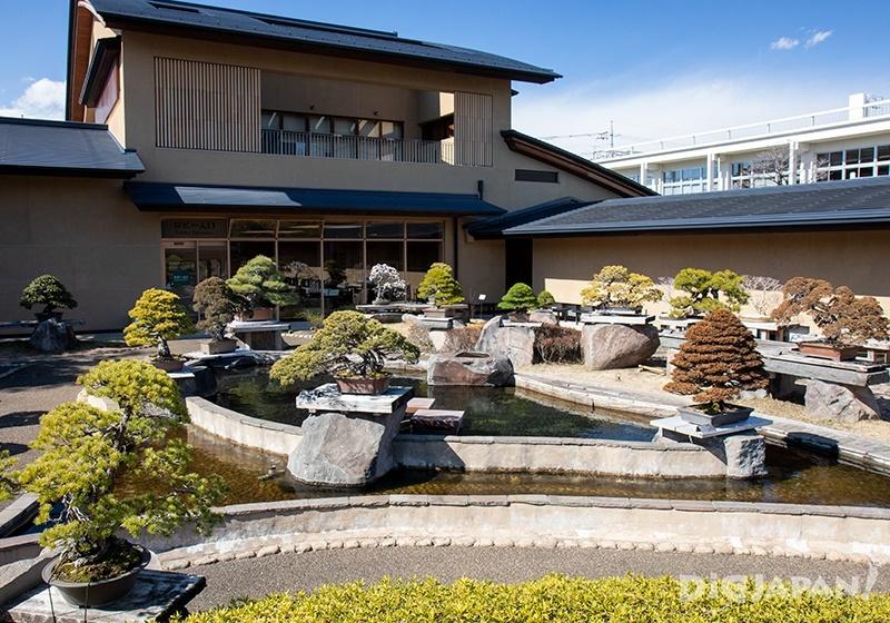 Bonsai Garden 2
