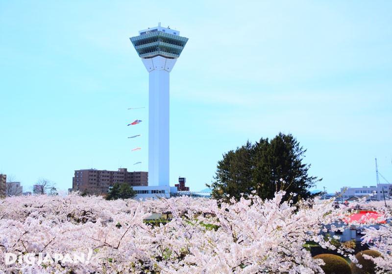 北海道五稜郭公园3