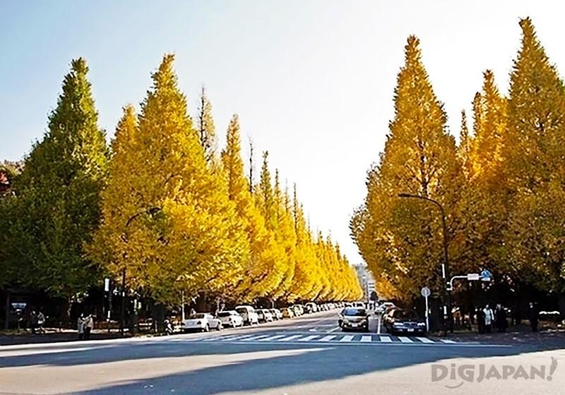 神宫外苑银杏并木(东京都)