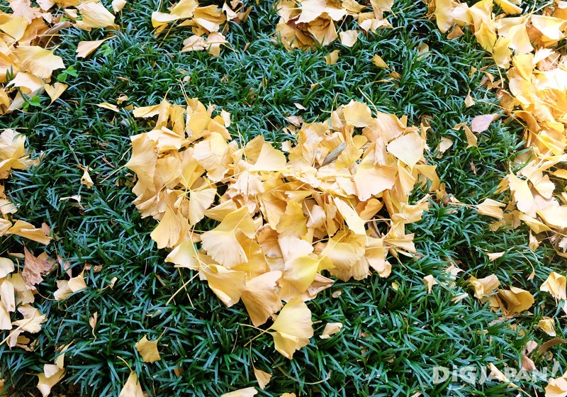 I used the leaves to make a heart