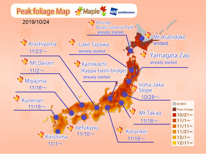 Momiji (Japanese Maple Tree) Viewing Time Forecast by Location