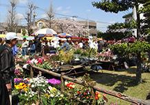 ต้นเดือนเมษายน(โดยประมาณ) : เทศกาลดอกไม้