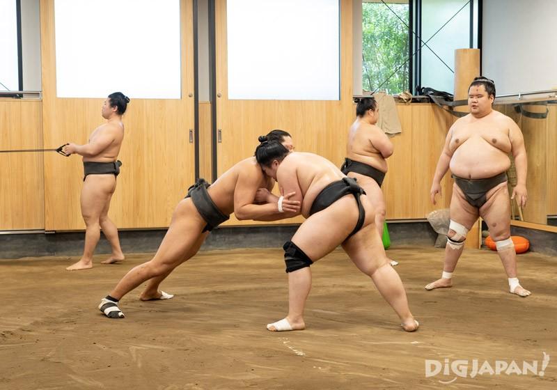 Sumo morning training at Azumazeki Beya, Katsushika