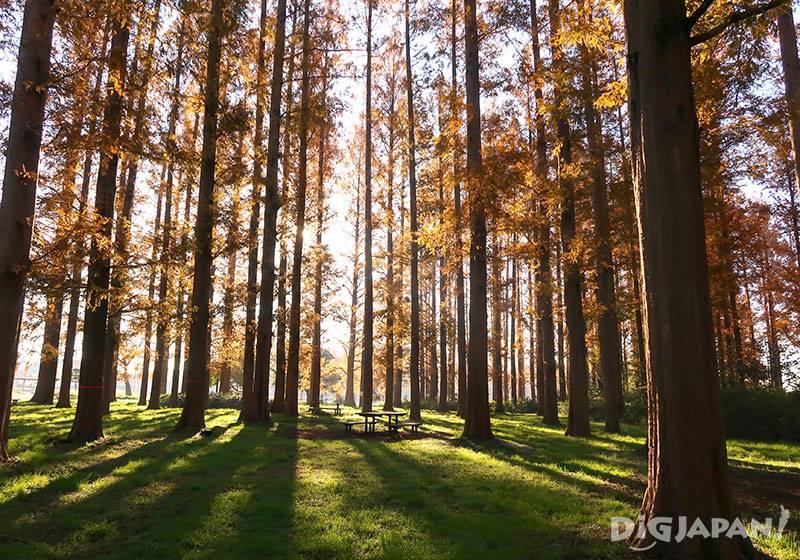 Mizumoto Park(autumn)