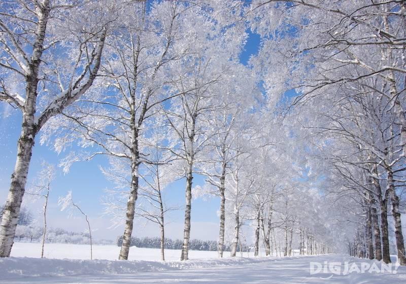 霧冰(十勝・音更町)