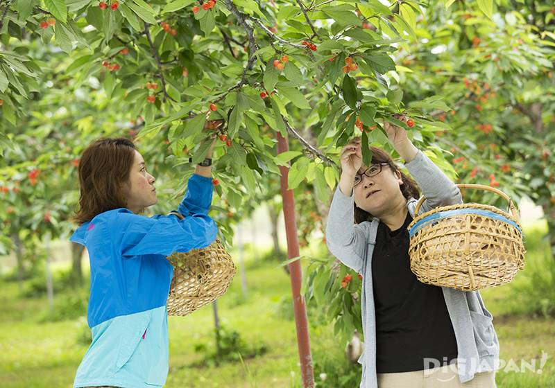 Fruit harvesting is scheduled to start in 2020