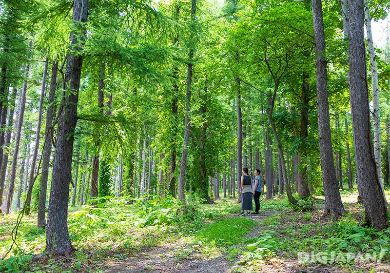 The forest is being developed with a 50 year plan