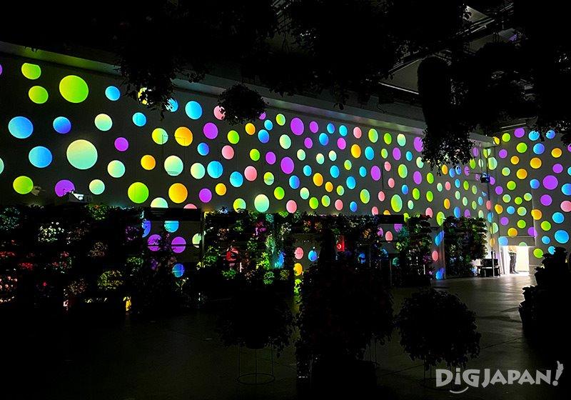 HANA BIYORI_花卉與數位藝術結合的投影秀