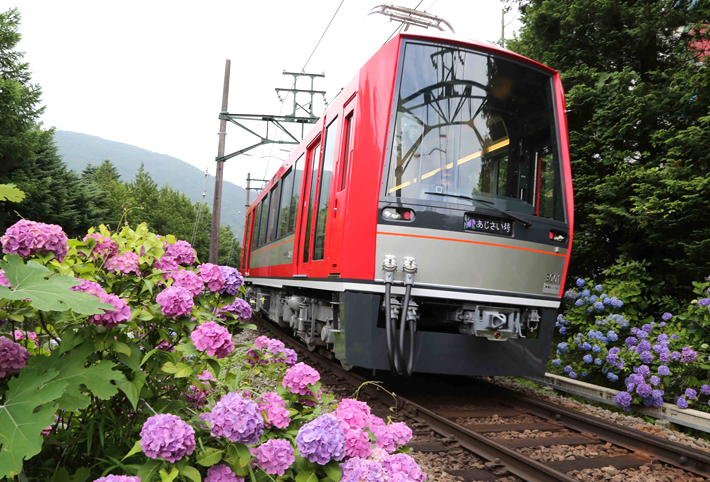 Hydrangea blooming along the Hakone Tozan Railway