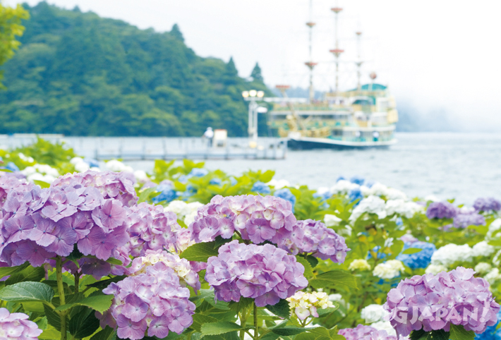 Hydrangea near Lake Ashi and the pirate ship