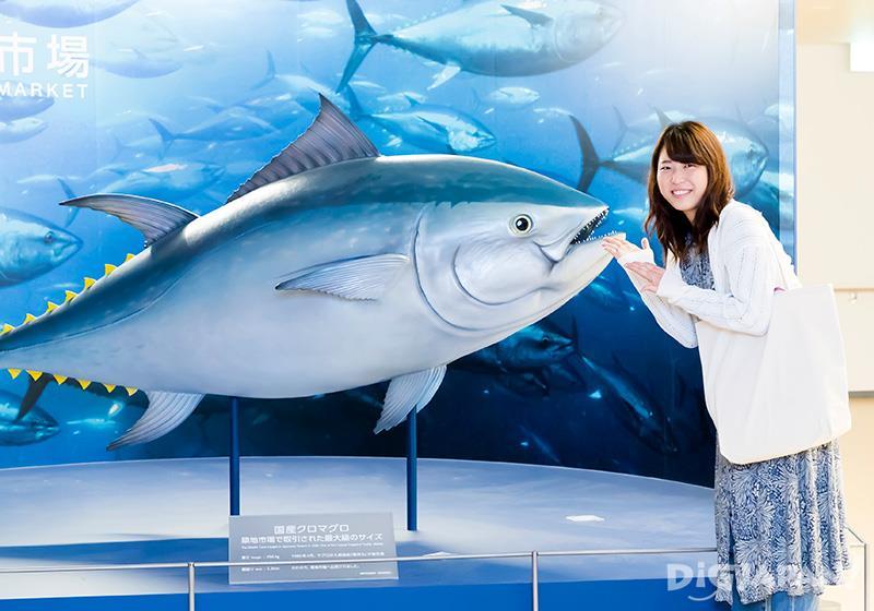 ตกใจกับหุ่นจำลองปลามากุโร่ขนาดยักษ์