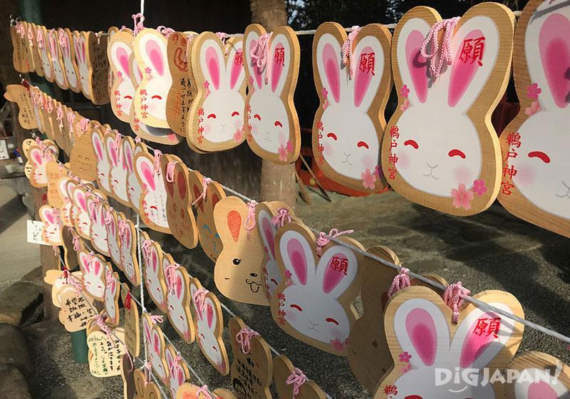 兔子的蹤影