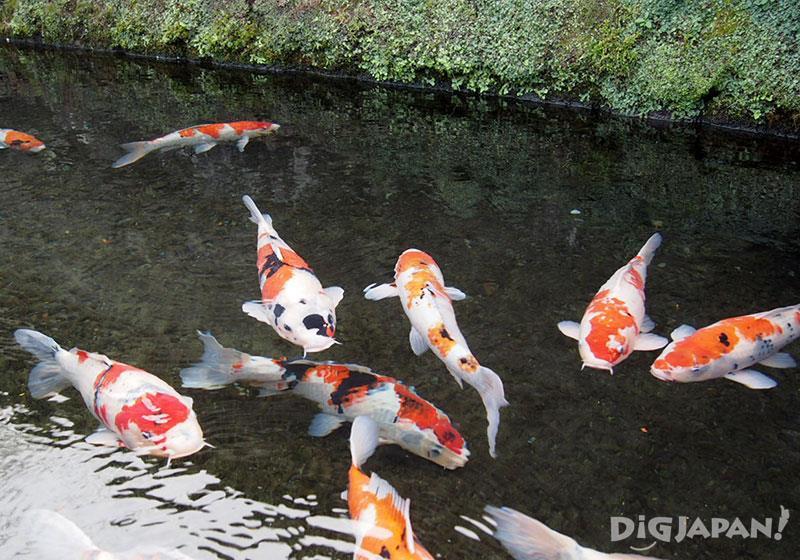 鯉魚放生處