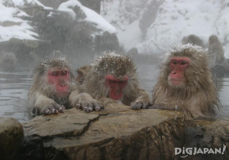 ชมลิงที่อยู่ตามธรรมชาติได้ตลอดทั้งปี